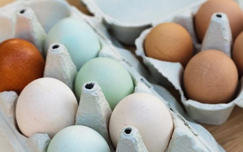 types of chicken eggs colors