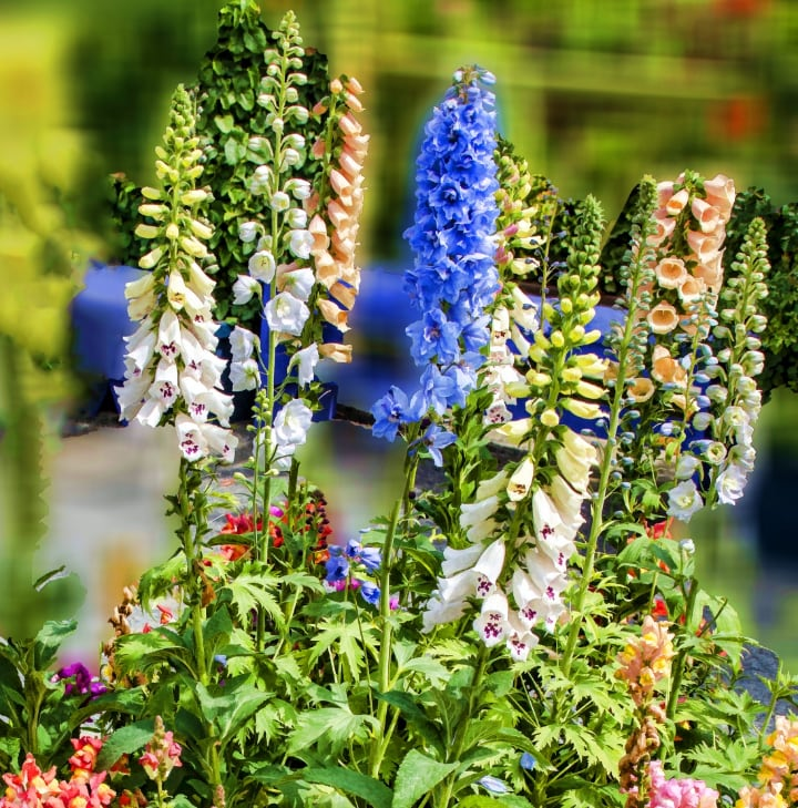 types of delphiniums