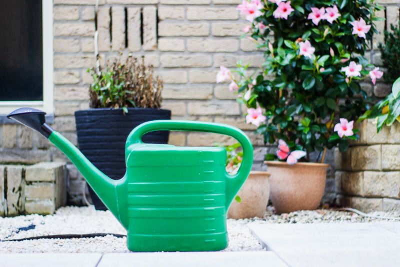 watering cucumbers