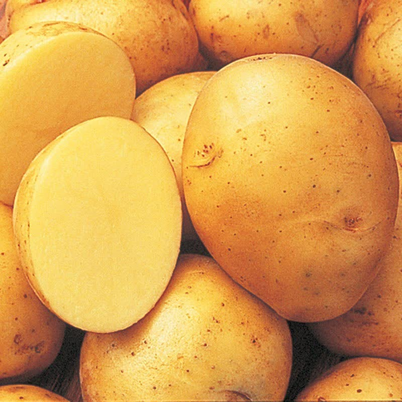 yokon gold potatoes