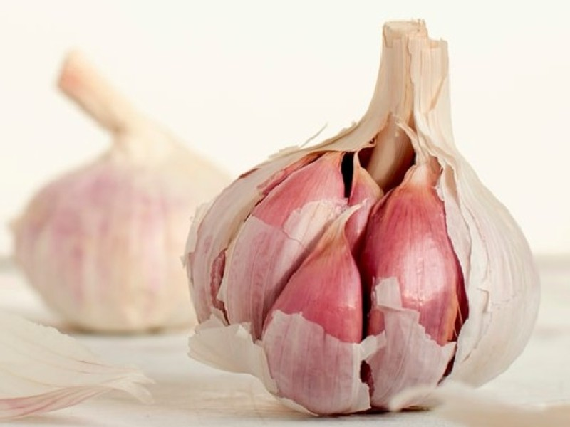benefits of garlic plants