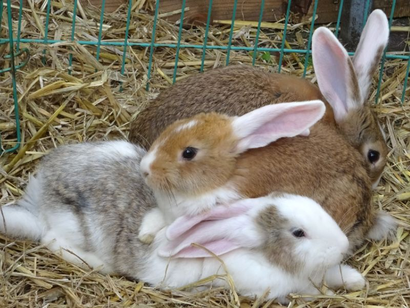 best-bedding-for-rabbits