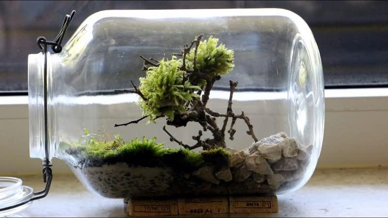 bonsai terrarium DIY