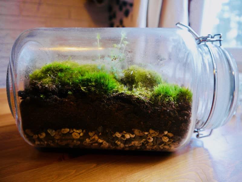 closed terrarium moss