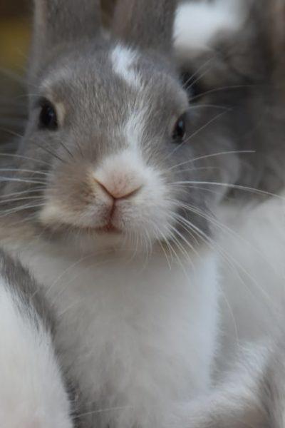 cute fluffy white gray rabbits