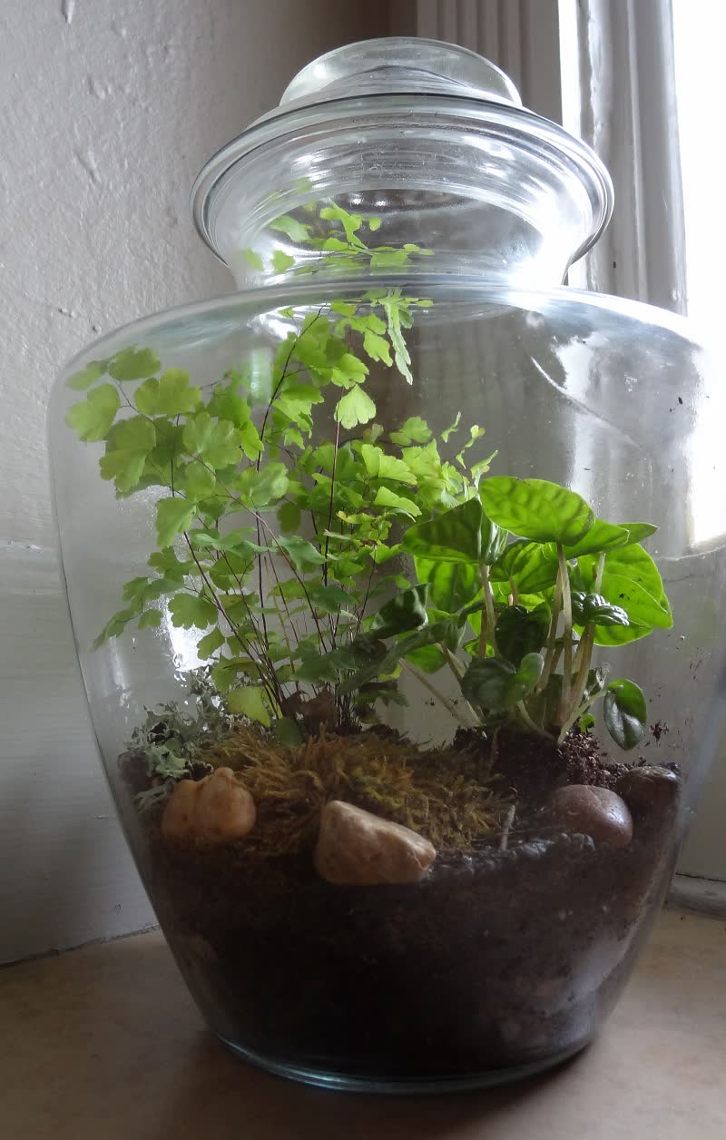 20 Best Terrarium Plants For A Beautiful Diy Terrarium