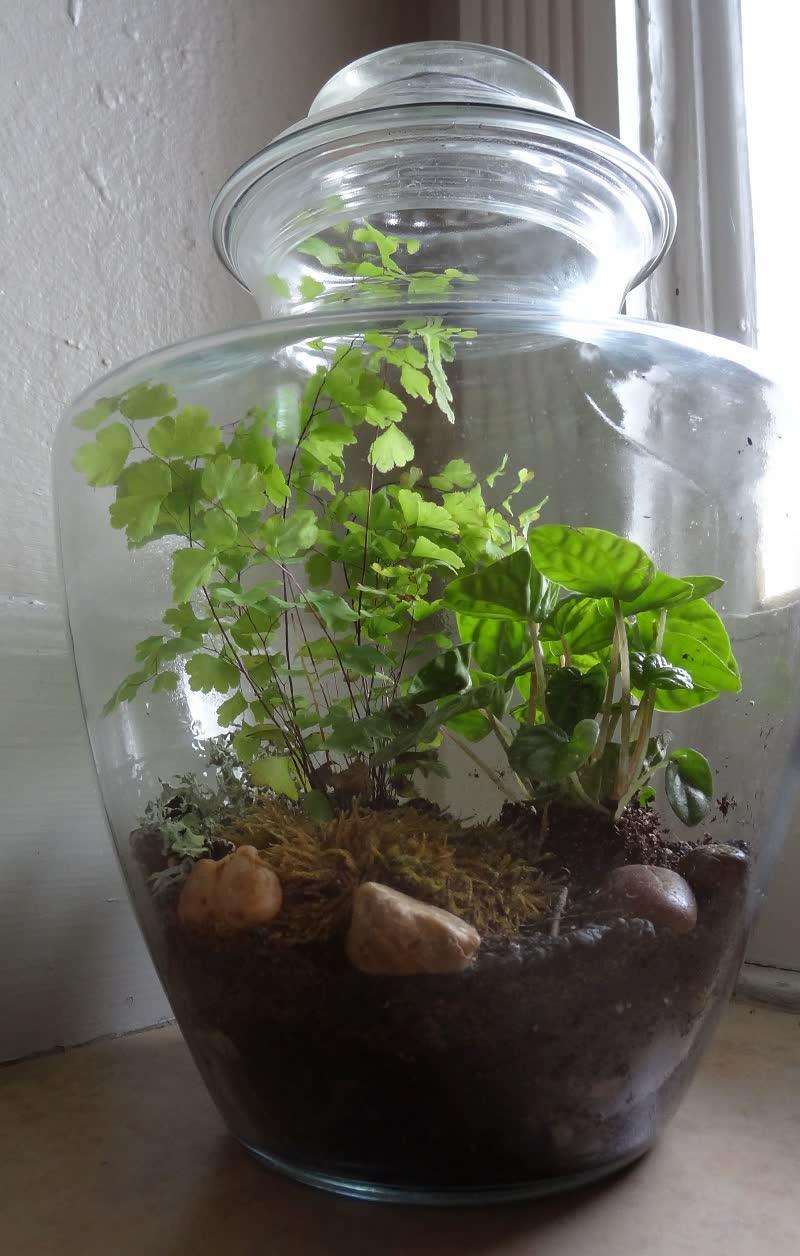 fern closed terrarium
