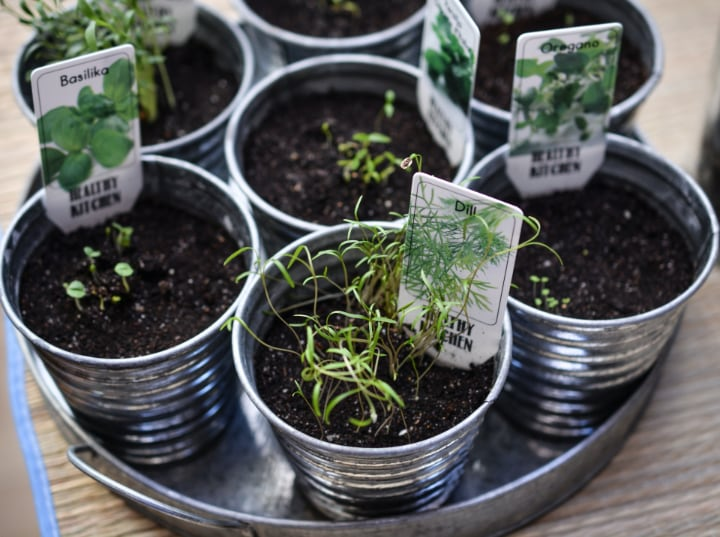 Growing Herbs and Vegetables Indoors
