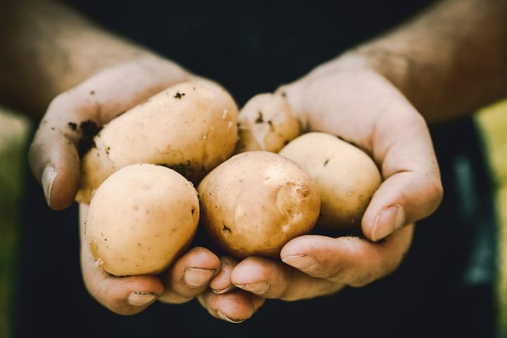 Growing Potatoes Indoors