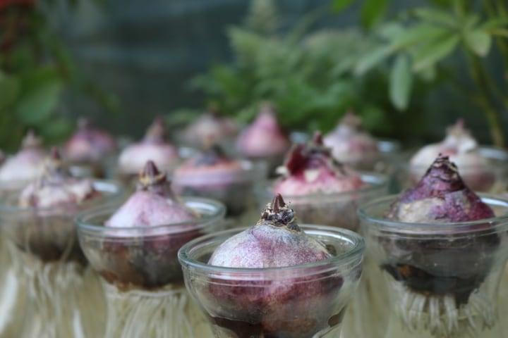Growing Vegetables Indoors in Water