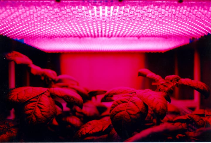 growing vegetables indoors with lights