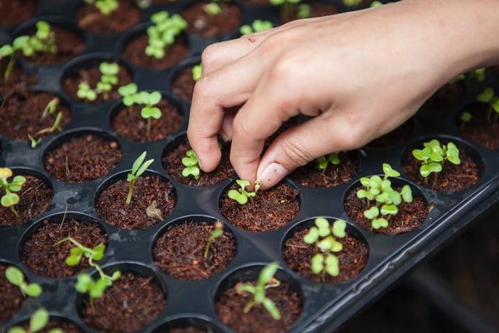 growing veggies indoors