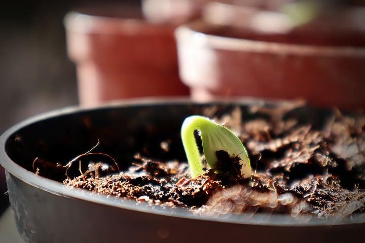 indoor growing soil medium