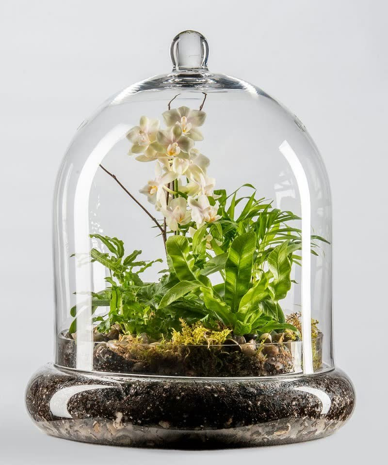 miniature orchids terrarium