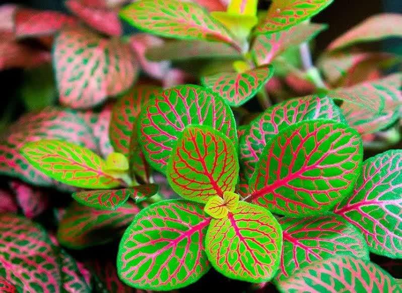 never plant terrarium