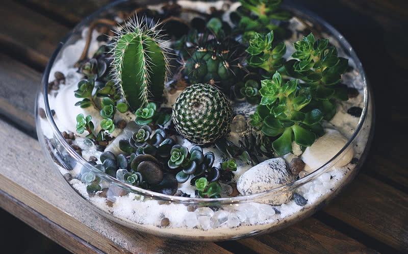 open terrarium cacti