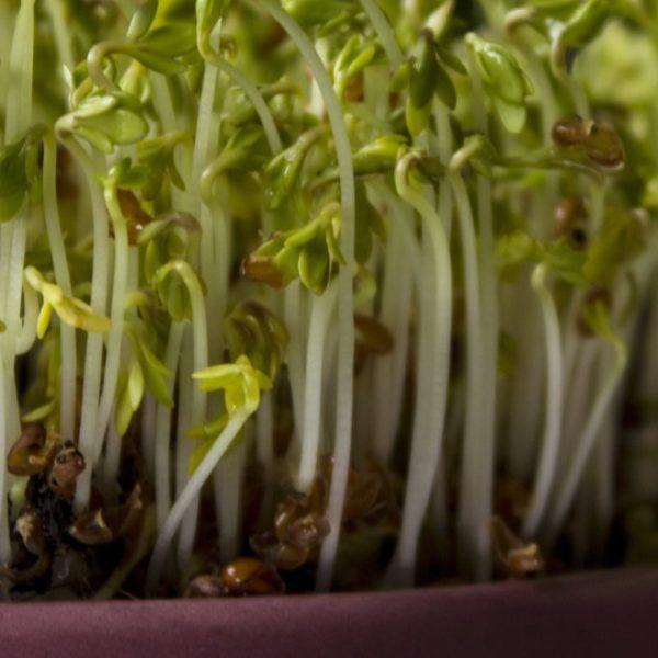 planting vegetables indoors