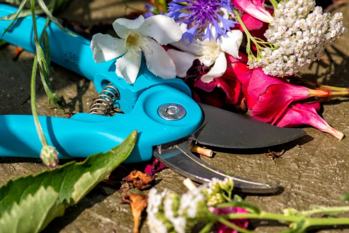 pruning shears for anemone flowers