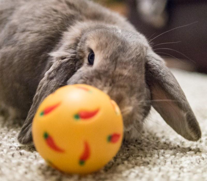 rabbit-toys
