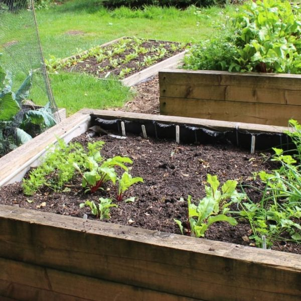 raised garden beds with plants