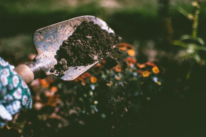 selecting the best soil type for plants