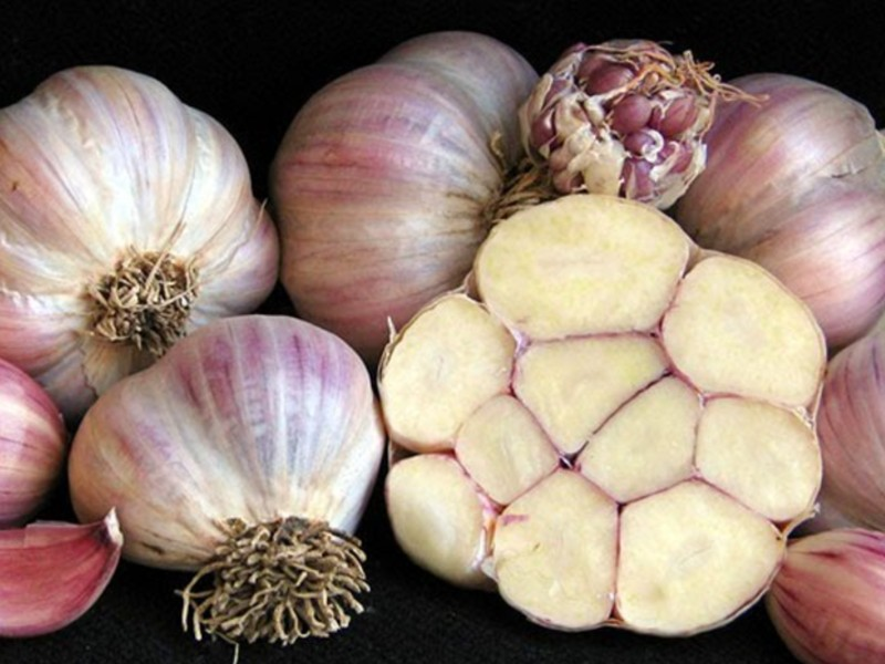 silverskin garlic plants