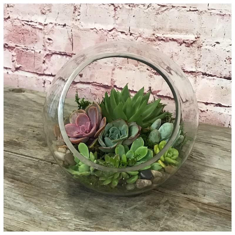 succulents terrarium plant