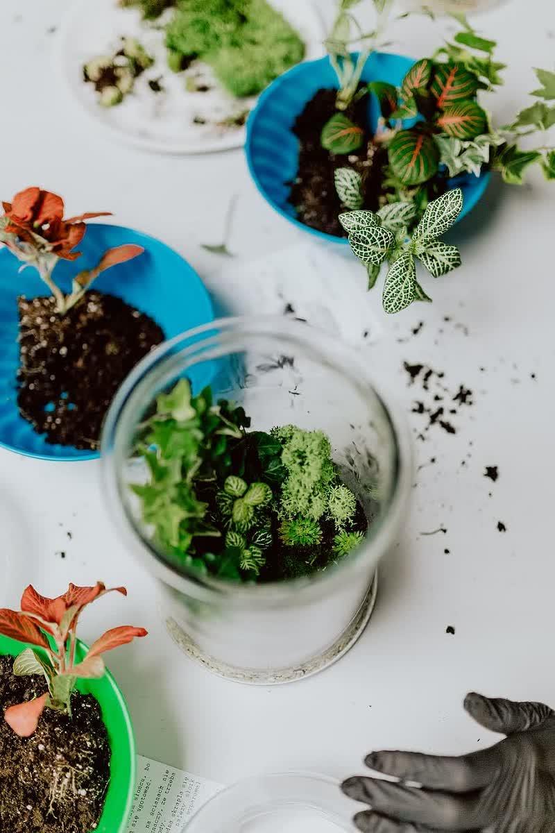 terrarium plant types