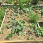 vegetable raised garden bed in a sunny spot