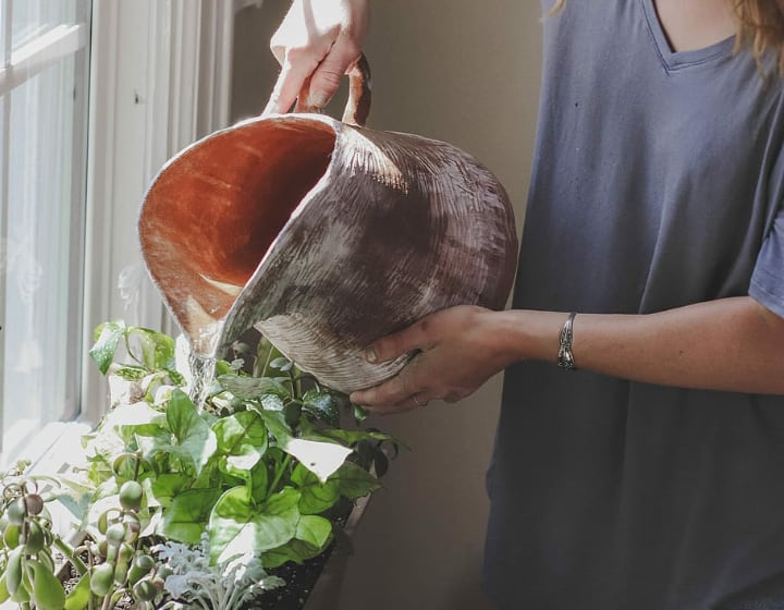 waterting plants indoors