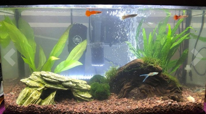 aquarium substrate