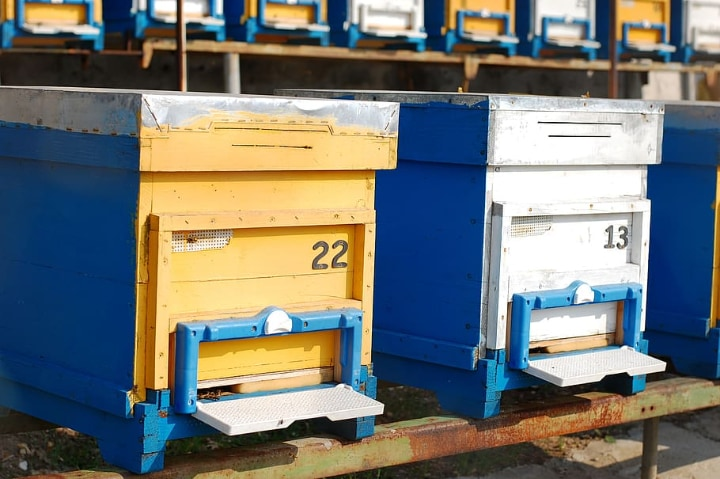 bee hive options