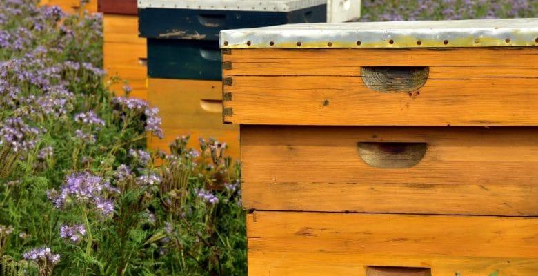 bee house in the flower garden