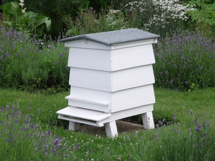 bees house in the garden