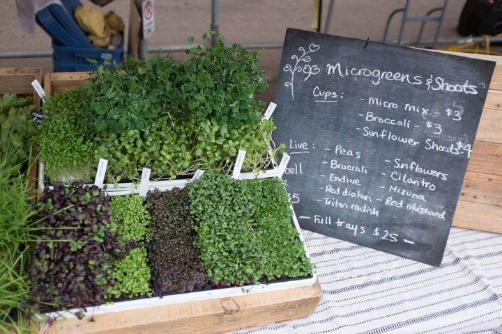best microgreens to grow