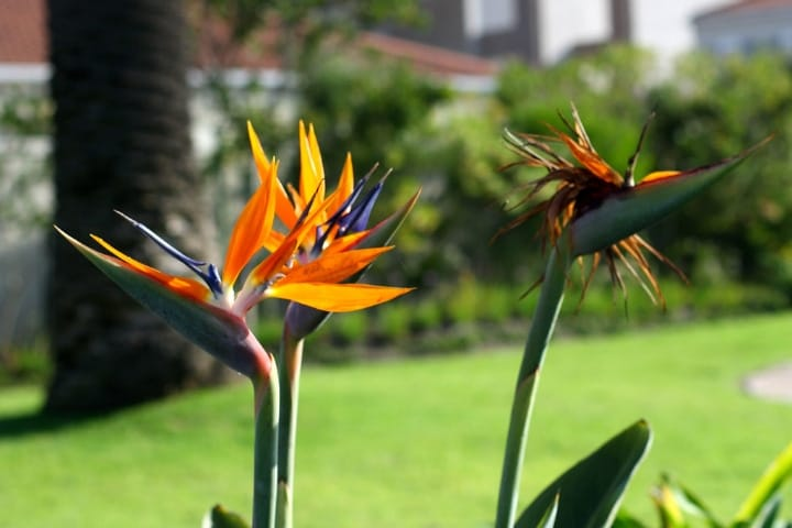 birds of paradise low light indoor shade trees