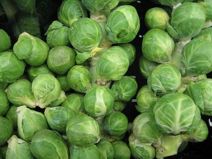 confidant brussel sprouts