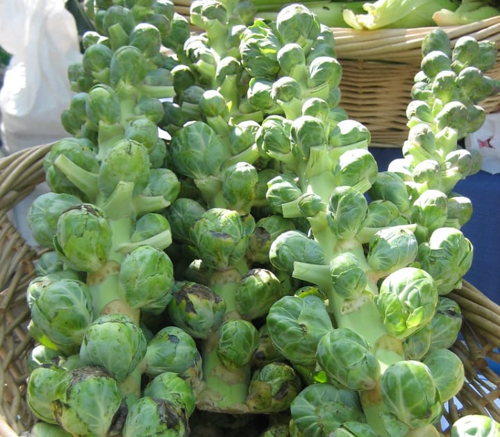 cryptus brussel sprouts