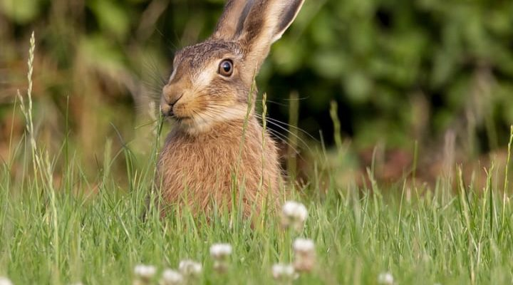cute rabbit on the grass