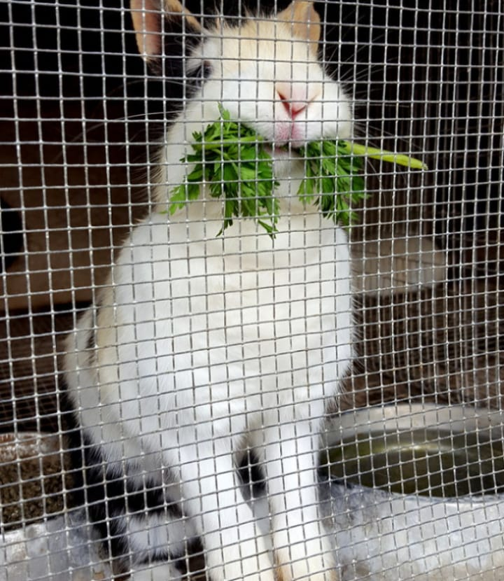 diy wire mesh rabbit cage