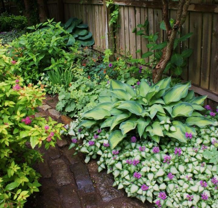 flowering shade plants