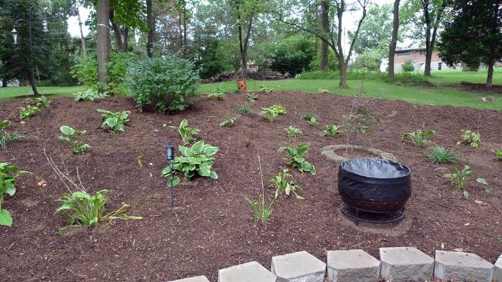 garden after mulching