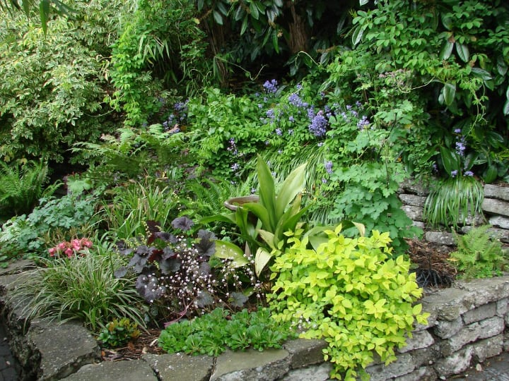 garden with shade plants
