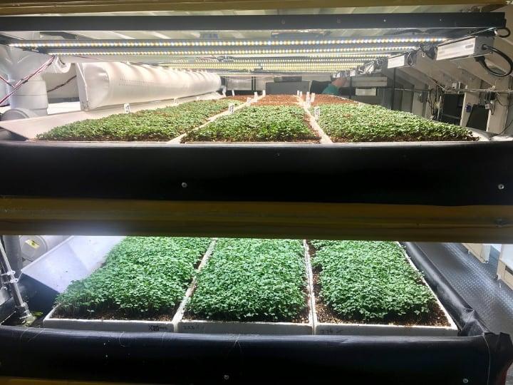 hydroponic microgreen system inn edenworks