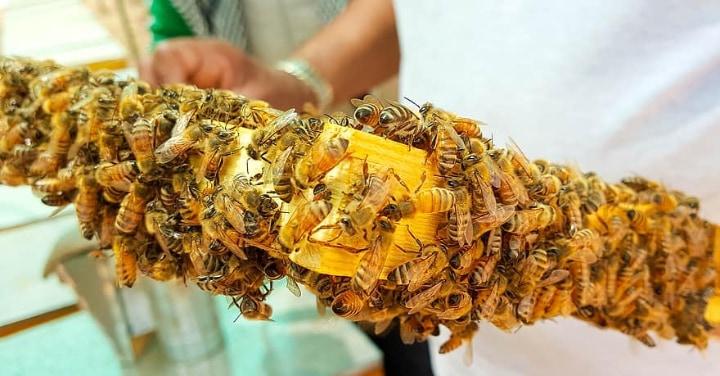 keeping bees up close