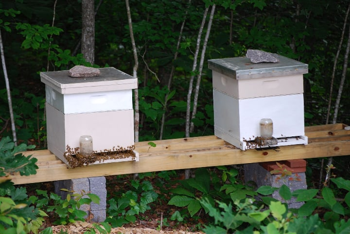 keeping more than one hive in the garden
