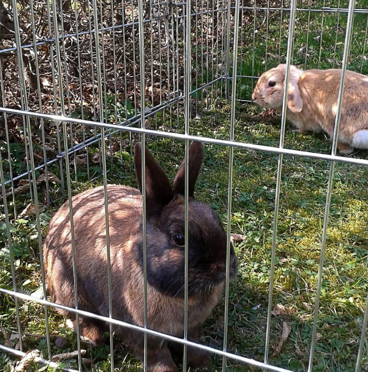 large bunny cage outside