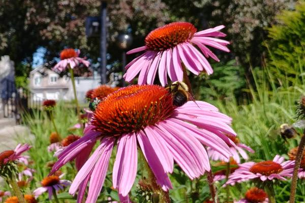 list of flowers that attract bees