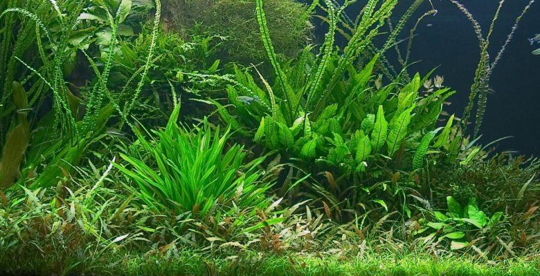 luscious green aquarium plants
