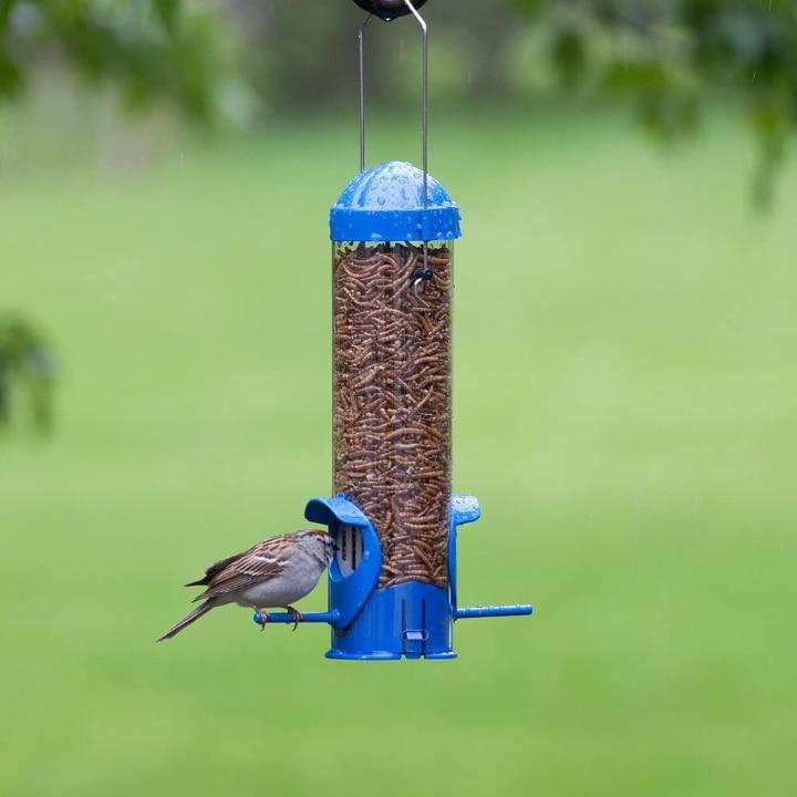 mealworm bird feeder